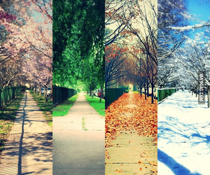 autumn, spring, and summer image