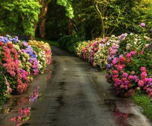 flowers, plants, and gardens image