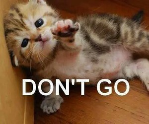 cat, cute, and don't go image