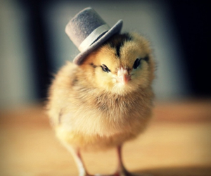 cute, hat, and animal image
