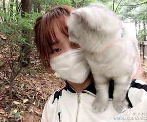 cat, jia, and cute image