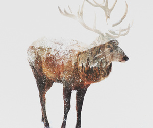 animal, art for sale, and antlers image