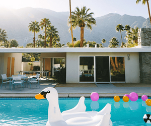 pool, summer, and Swan image