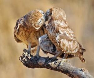 kiss, owl, and animal image