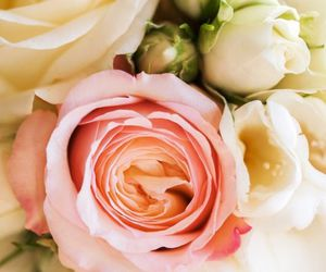 bouquet, roes, and pink image