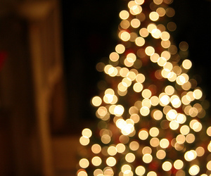 christmas tree, december, and focus image