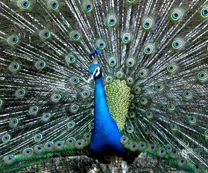 beautiful and pfau image