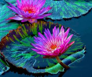 flowers and lotus image