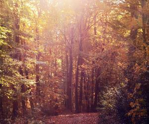 forest, golden, and landscape image
