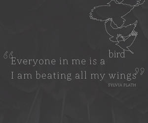beat, birds, and me image