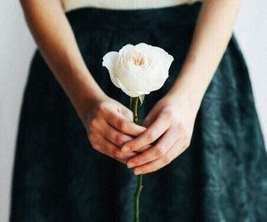 rose and white rose image