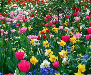 flowers, color, and nature image
