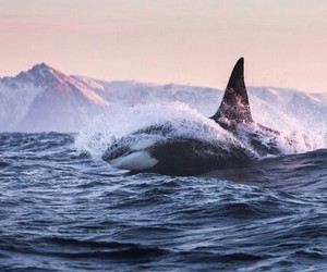 animal, ocean, and sea image