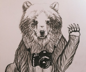 animal, art, and bear image