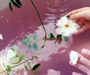flowers, pink, and bath image
