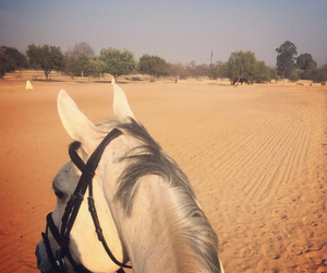 dressage, grey, and horse image