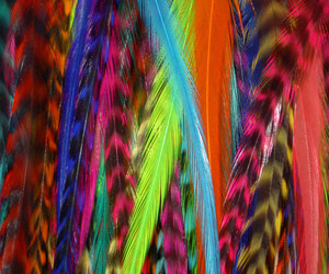 colored feather image