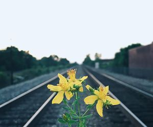 flower, photography, and railway image