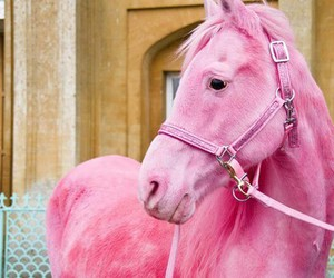 beautiful, pink, and horse image