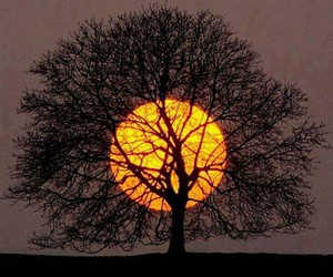 tree, sun, and nature image