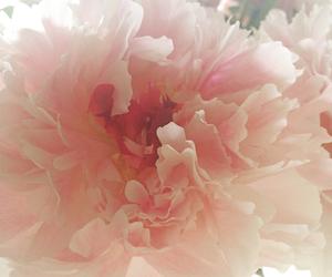 eye, flower, and flowerpower image