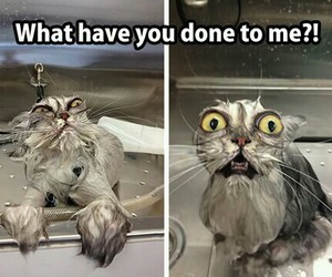 cat, funny, and laught image