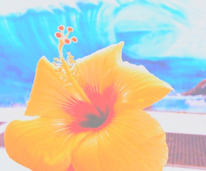 tumblr, bright, and flowers image