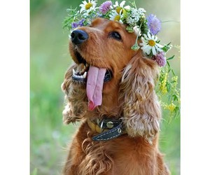 animal, dog, and flowers image