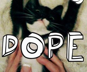 dope, cat, and cute image