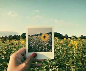 flowers, sunflower, and photo image