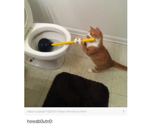 cats, cleaning, and funny image