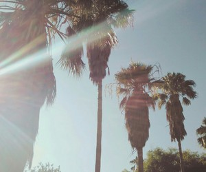 california, palm trees, and cali girl image