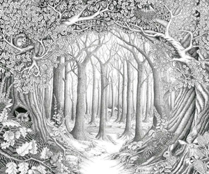drawing and forrest image