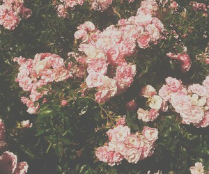flowers, hipster, and nature image