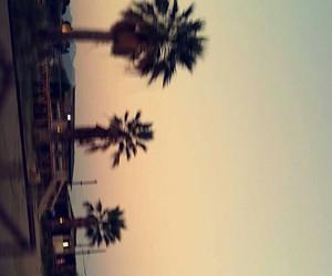 beautiful and palm tree image