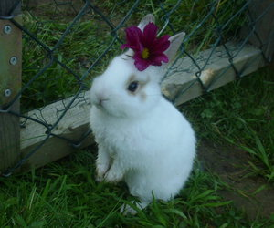 bunny, rabbit, and flowers image