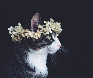 flower and cat image