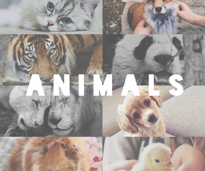 animals, hipster, and photos image