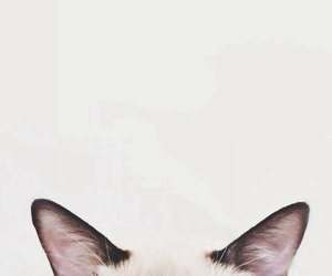 cat, animal, and ear image