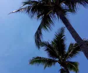 mine, nature, and palm image