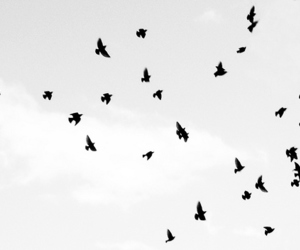 bird, sky, and black and white image