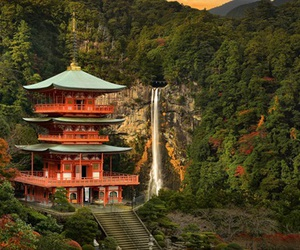 forest, japan, and mountain image