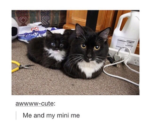 aww, cats, and tumblr post image