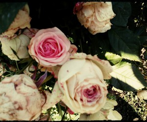 roses, mygarden, and vintage image