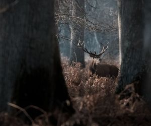 animal, forest, and tree image