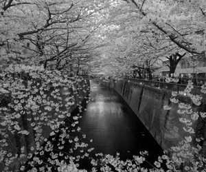flowers, japan, and photography image