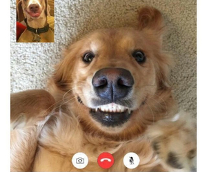 best friends, dog, and lol image