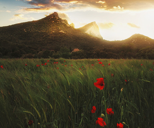 flowers, montain, and nature image