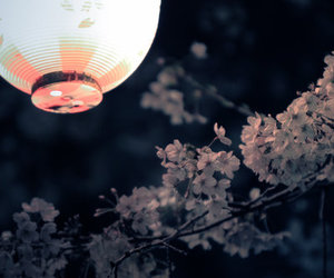 flowers, japan, and lantern image
