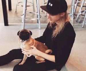 dog, cashmere cat, and pug image